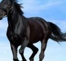 نمایشگاه اسب سواری برلین
